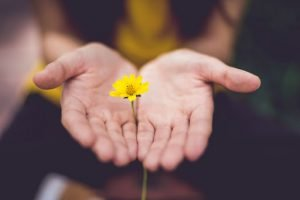 flower in the hand